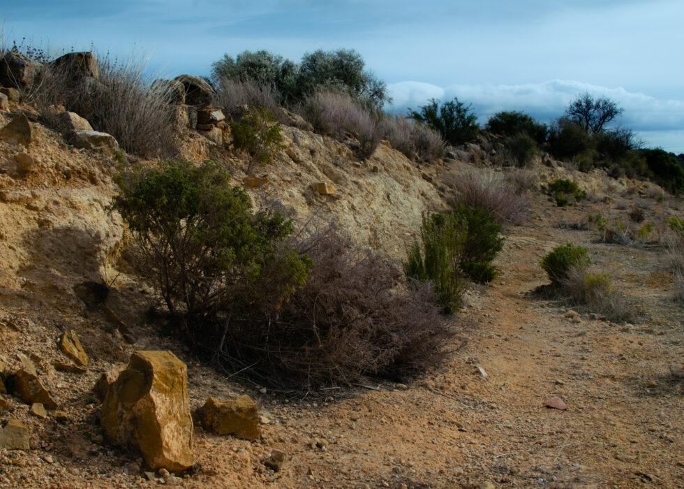 01-23-21-landscape